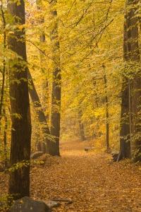 rock creek park, washington dc, rock creek hiking trails, autumn, fall, yellow, trees, changing color, NW DC,