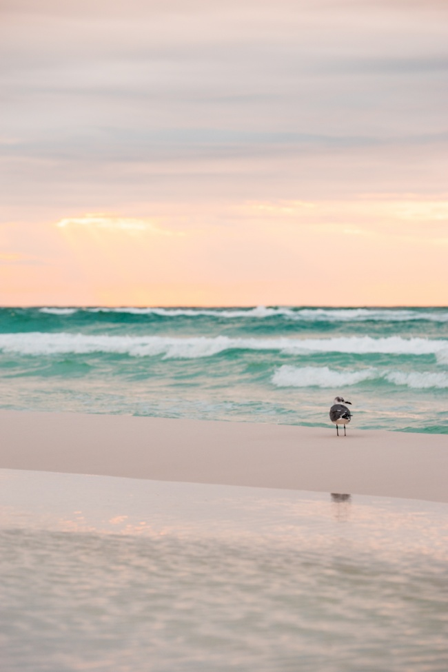 destin, florida, fl, gulf of mexico, emerald coast, panhandle, beach, bird, vow renewal, travel,