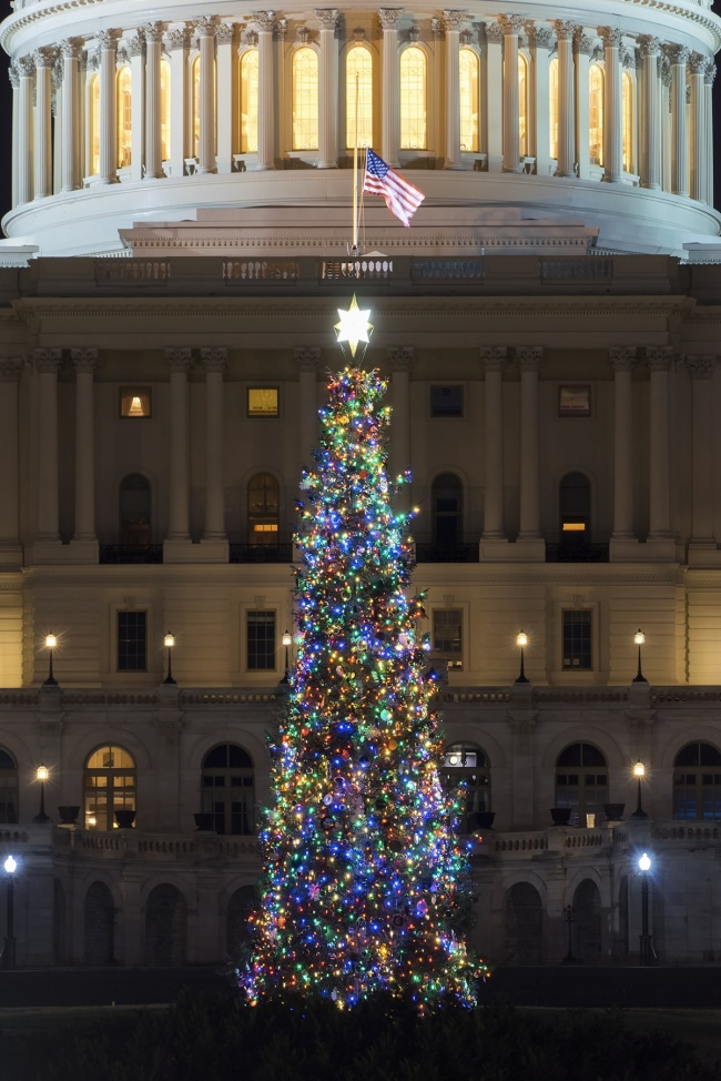 us capitol, washington dc, christmas tree, capitol christmas tree, lighting ceremony, merry christmas, happy holidays