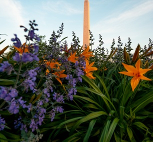 washington dc, washington monument, spring, floral library, national mall, flowers, spring, tidal basin