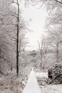 virginia, va, snow, winter, trees, road, sudley road, 234, stone bridge, stone bridge trail, manassas battlefield