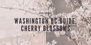 washington dc, cherry blossoms, guide, tips, tidal basin, washington monument, metro, parking, flowers, sakura, japanese,