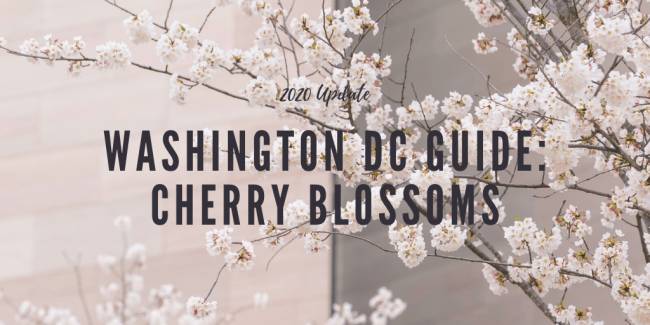 washington dc, cherry blossoms, guide, tips, tidal basin, washington monument, metro, parking, flowers, sakura, japanese,