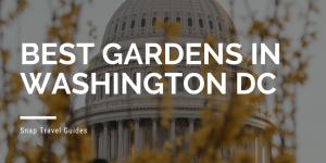 washington dc, garden, spring, plants, flowers, cherry blossoms, magnolias, capitol, capital, saucer magnolias, pink flowers, forsythia, snap travel, national mall