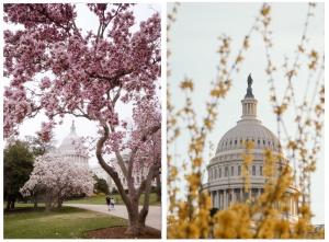 washington dc, us capitol, capitol grounds, capitol building, capital, us capital, spring,