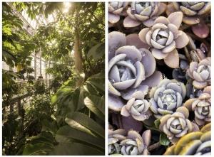 us botanical garden, washington dc, national mall, conservatory, flowers, desert, plants, garfield circle,