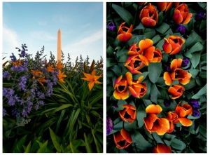 floral library, tidal basin, tulips, national mall,