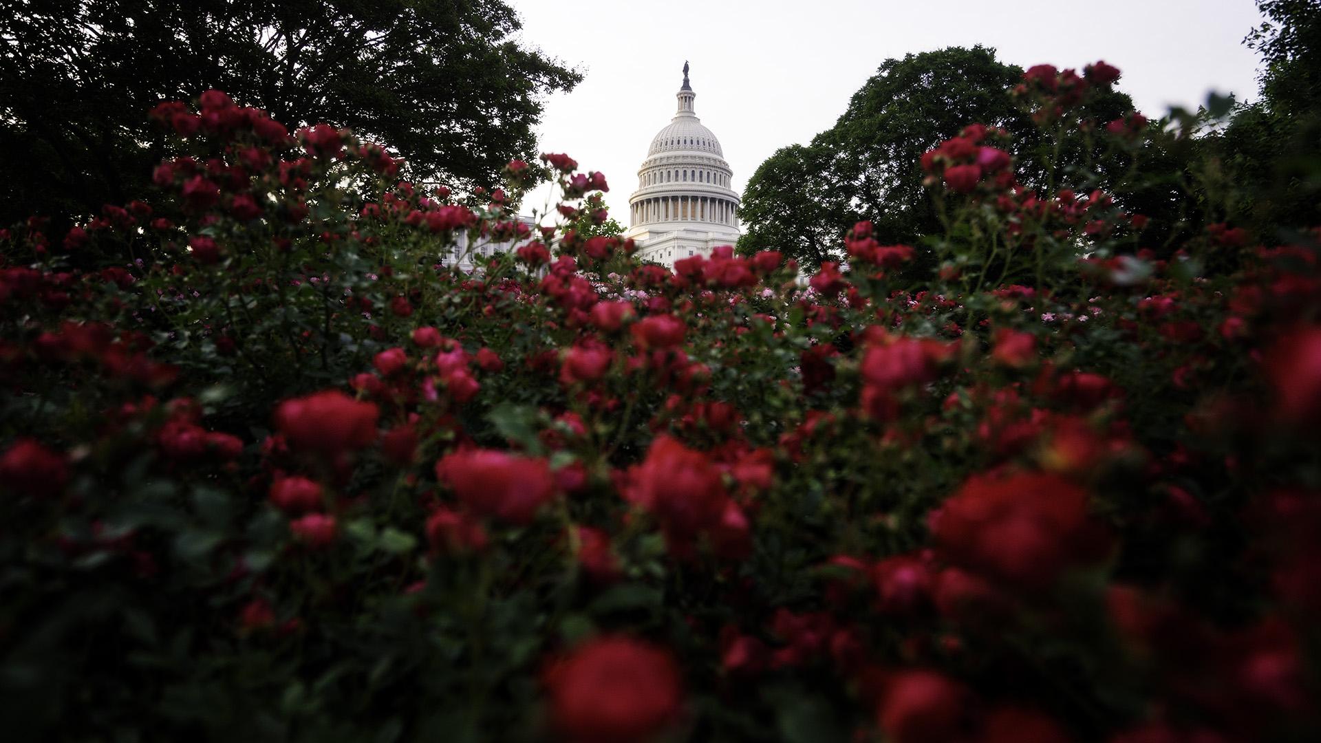 US_Capitol_Flowers_Zoom_Background_Angela B Pan