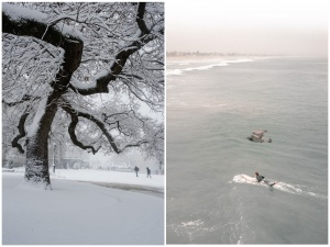 san diego, washington dc, library of congress, snow, spring, winter, tree, california, surfer, pigeon