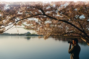 herry blossoms, jefferson memorial, spring, film,
