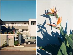 san diego, california, kodak ultramax, film, flowers
