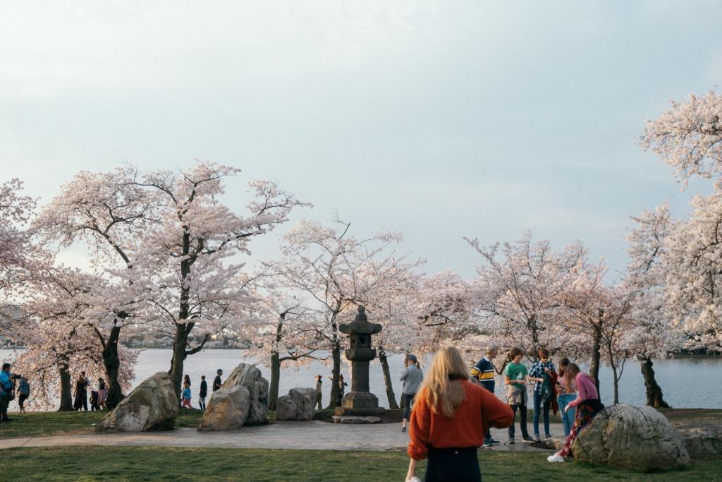 tidal basin, Japanese lantern, visitors, tourists, cherry blossoms, covid-19