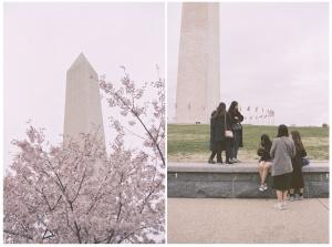 washington dc, washington monument, cherry blossoms, spring, film, porta