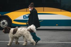 alexandria, northern virginia, va, pedestrian, mask, walk dog,