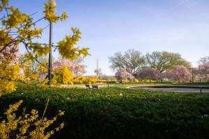 george mason memorial, tidal basin, spring, cherry blossoms, washington monument,