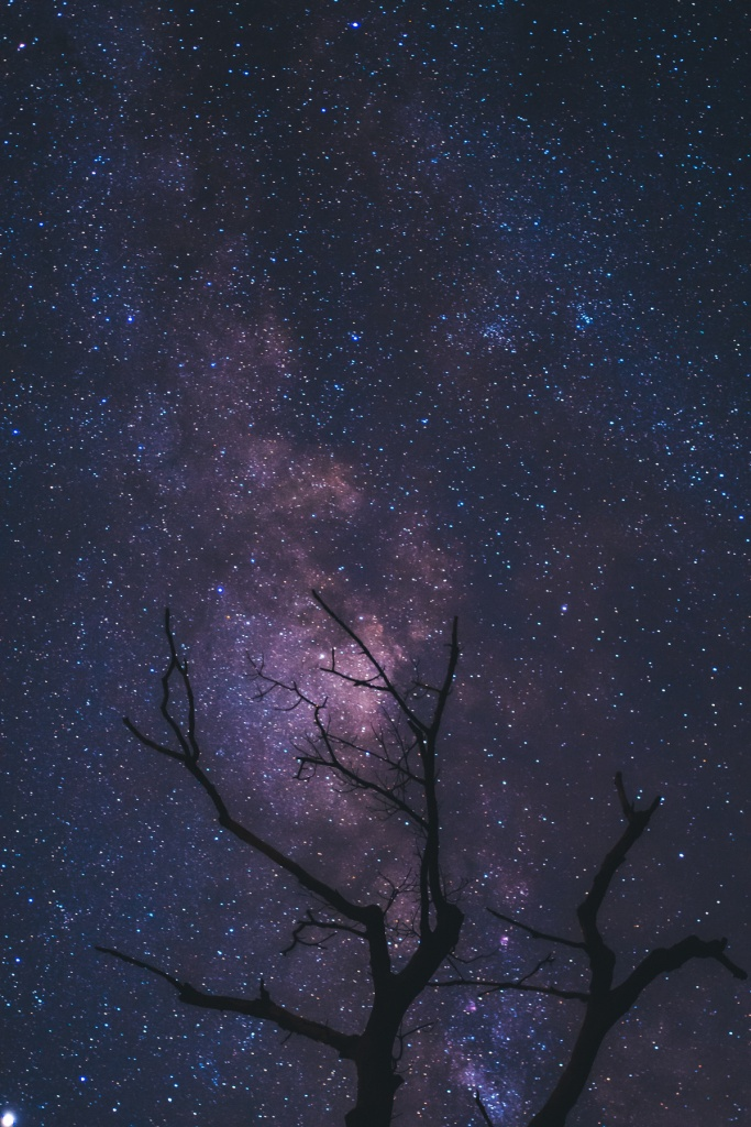 night photography, shenandoah national park, tree, branches, virginia, skyline drive, milky way, stars,