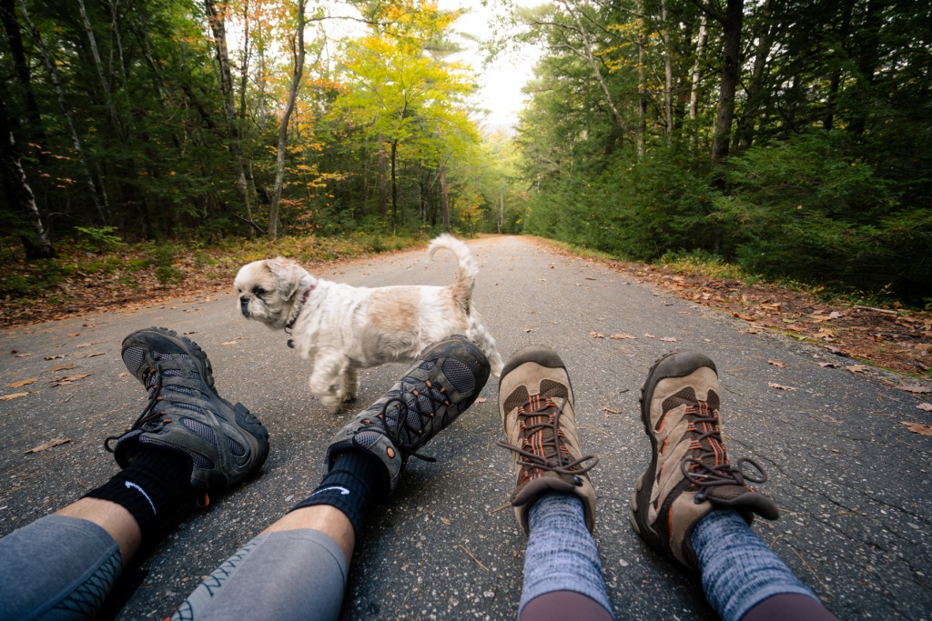 new england, new hampshire, white mountains, national forest, hike, hiking shoes, merrell boots, hiking boots, paved trail, shih tzu, travel, cathedral ledge, crawford,