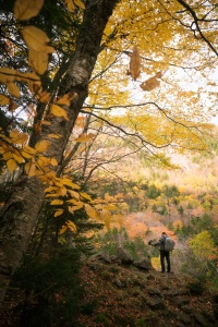 new england, new hampshire, crawford notch, flume cascade, photographer, fall, autumn, trees, road side, road trip,