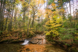 new england, new hampshire, road trip, trail, the basin, waterfall, autumn, fall, franconia, hiking trail,