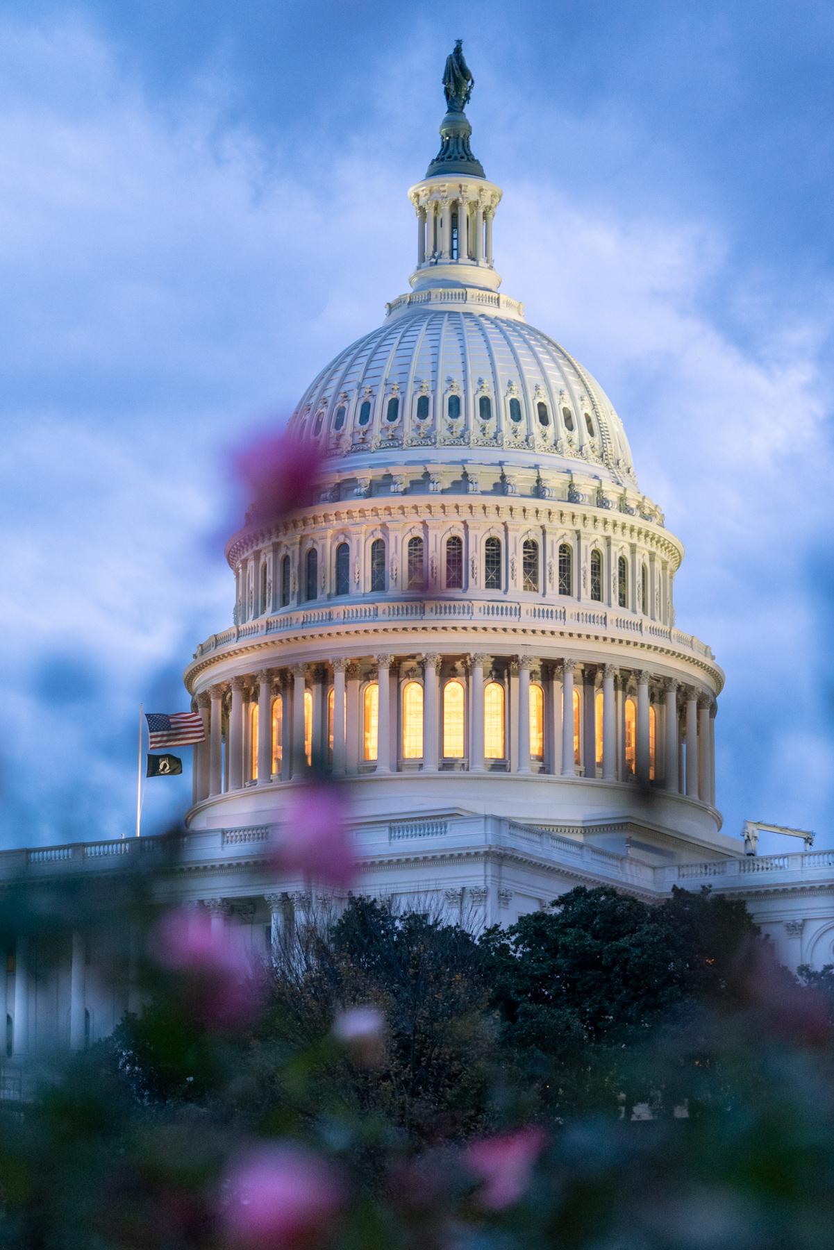 us capitol, roses, us capitol grounds, us capitol building, sunrise, blue hour