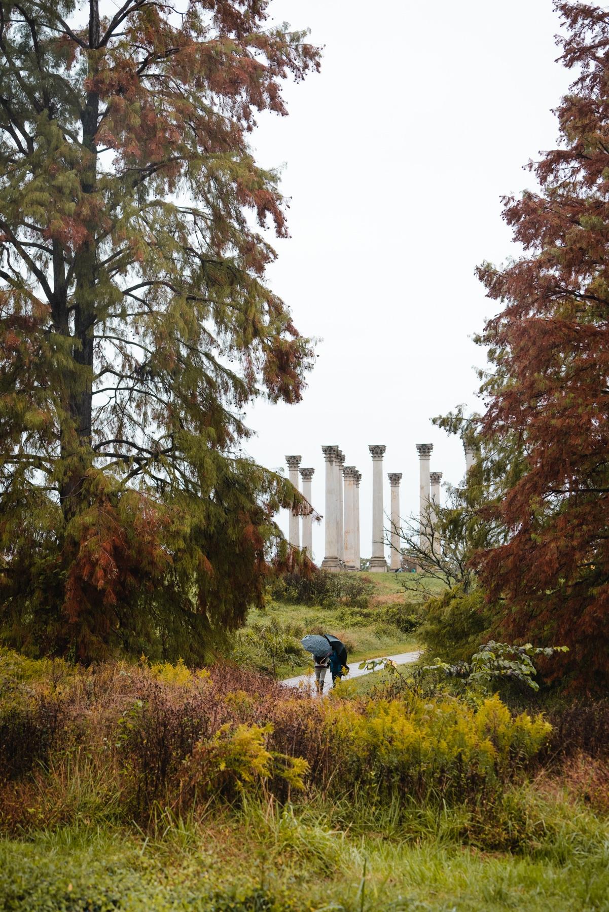 us arboretum, national arboretum, photo club, photowalk, rain, northeast washington dc, United States Department of Agriculture's Agricultural Research Service