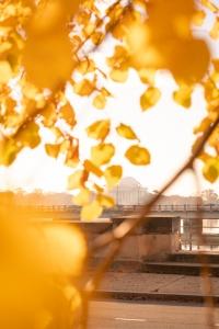 jefferson memorial, reflection, tidal basin, national mall, sunrise, duck, bird, washington dc, gold leaves, fall, yellow leaves, trees, framing