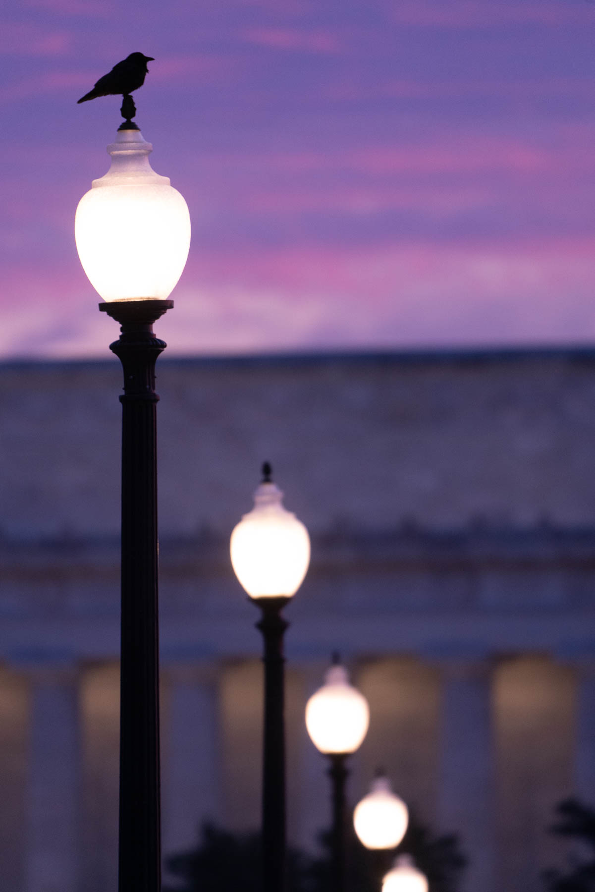 lincoln memorial, sunrise, washington dc, street lamps, compression, lines, street photography, bird