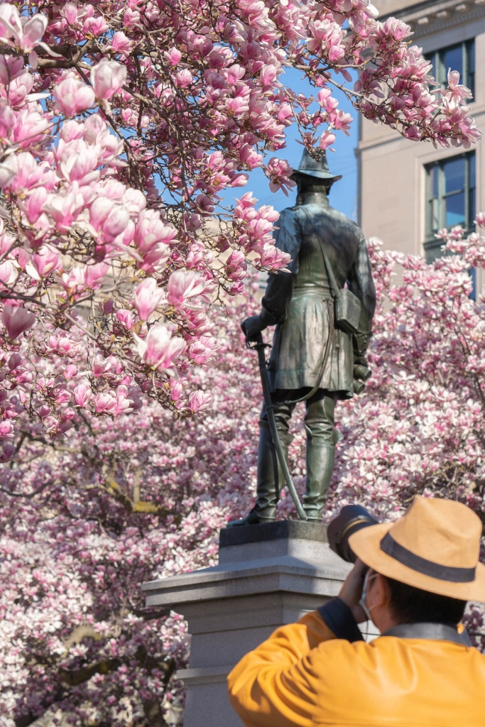 rawlins park, washington park, rawlins statute, street photography, washington dc, pink magnolias, blossoms