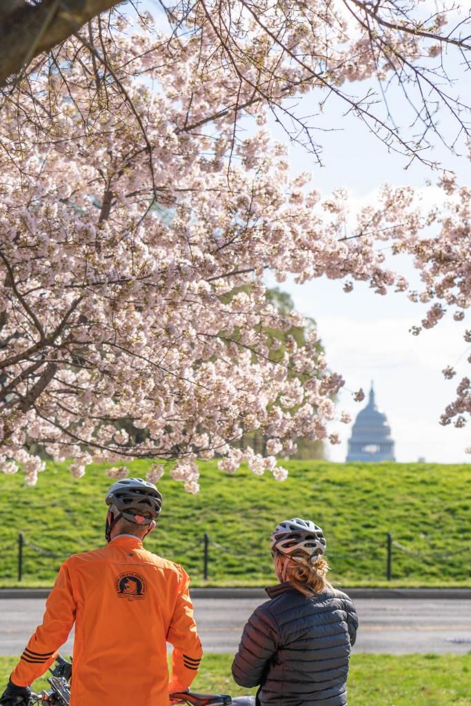 us capitol, national mall, cherry blossoms, washington dc, pink, national mall