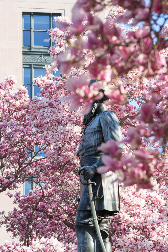 rawlins park, washington dc, northwest dc, magnolias, pink flowers, magnolia trees,